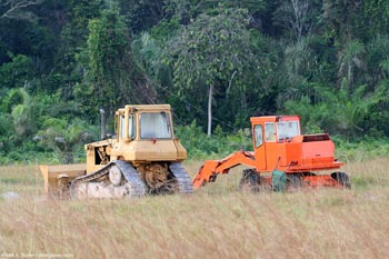 Tractors near a patch of rainforest