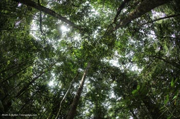 Rainforest in Gunung Palung National Park in Indonesian Borneo