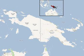Google Maps'-Landkarte von Neuguinea