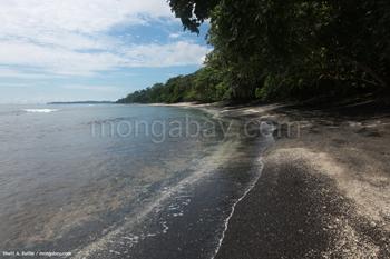 Una playa donde el Megapodio Maleo coloca sus huevos