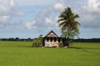 Hogares entre las terrazas de arroz