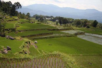 Terrazas de arroz en Torajaland