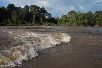 Fleuve de la forêt tropicale au Surinam