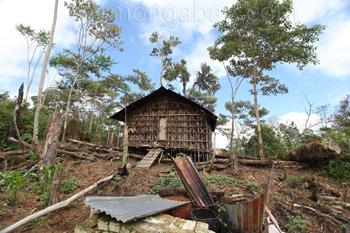 Traditionelle Hütte in den Arfakbergen außerhalb von Manokrawi