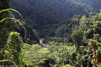 Rainforest in West Papua Province, Indonesia