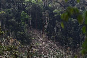 Entwaldung in den Arfakbergen