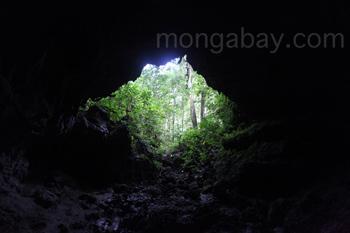 Höhle in einem Regenwald in Neuguinea