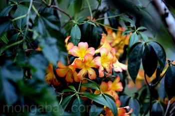Flores amarillas y naranjas