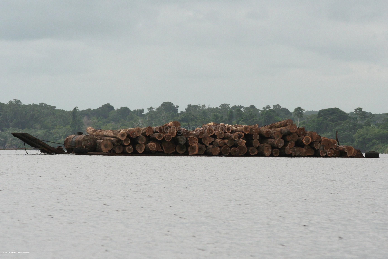 Baumstammtransport in Gabun