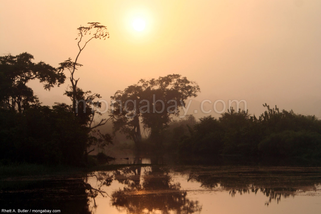 Regenwald in Gabun bei Sonnenaufgang