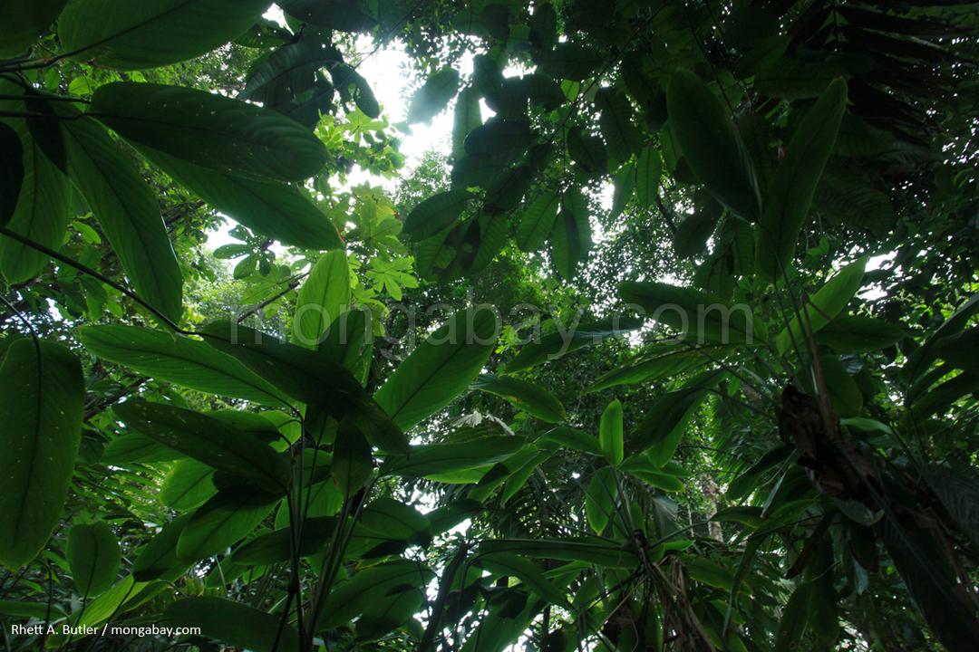 Regenwald in Kolumbien