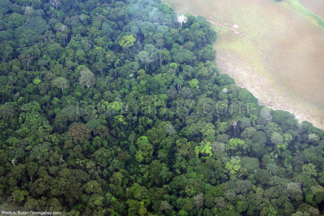 Luftaufnahme des Regenwaldes in Gabun