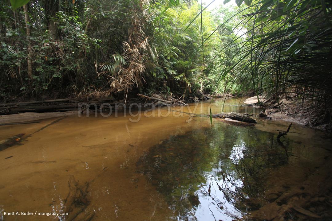 Sumpfwald auf Borneo