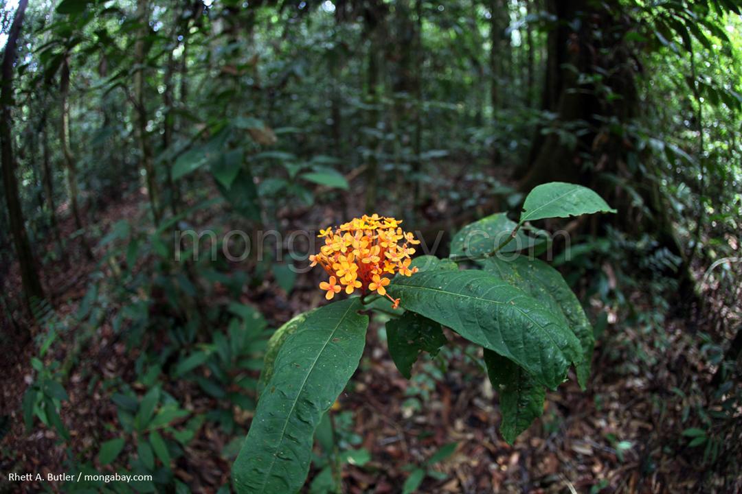 Wald in Kalimantan