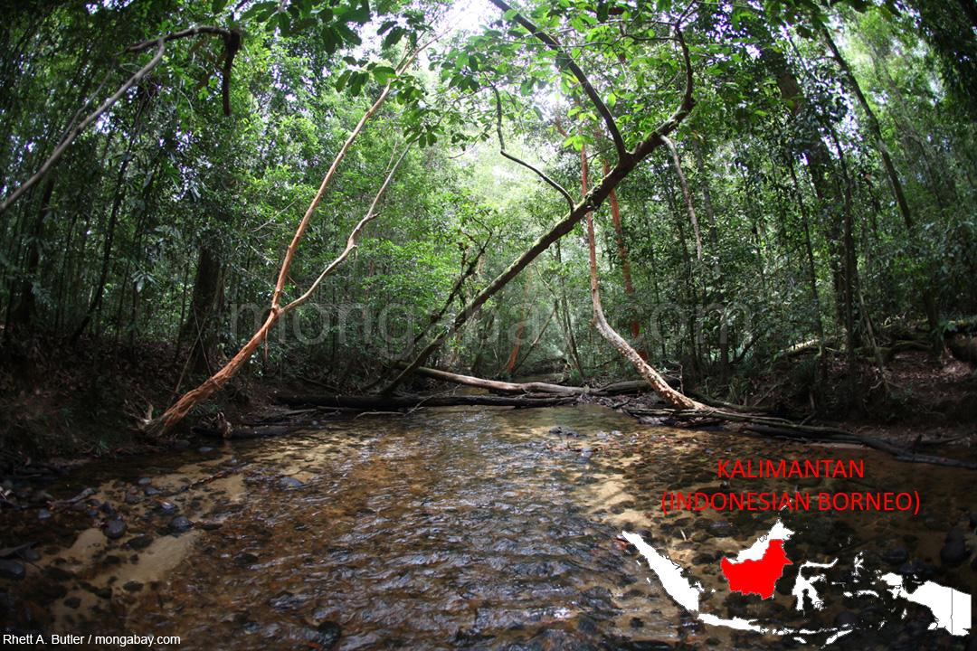 Regenwald in Kalimantan (Indonesischer Teil Borneos)