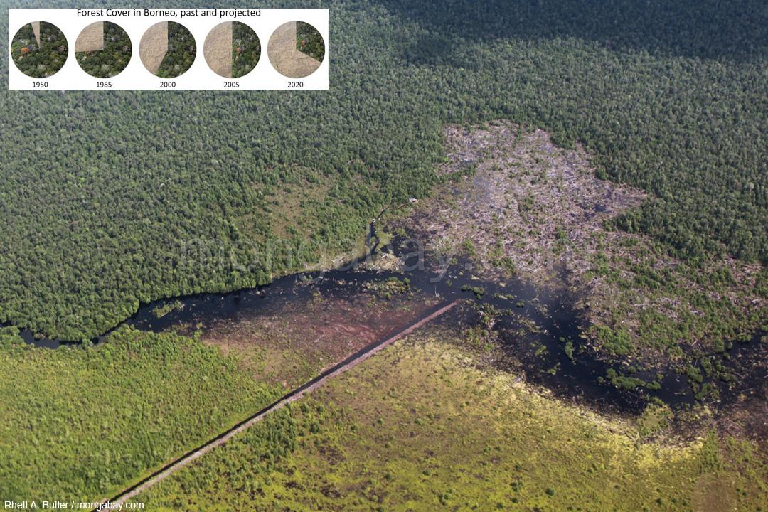 Abholzung in Kalimantan