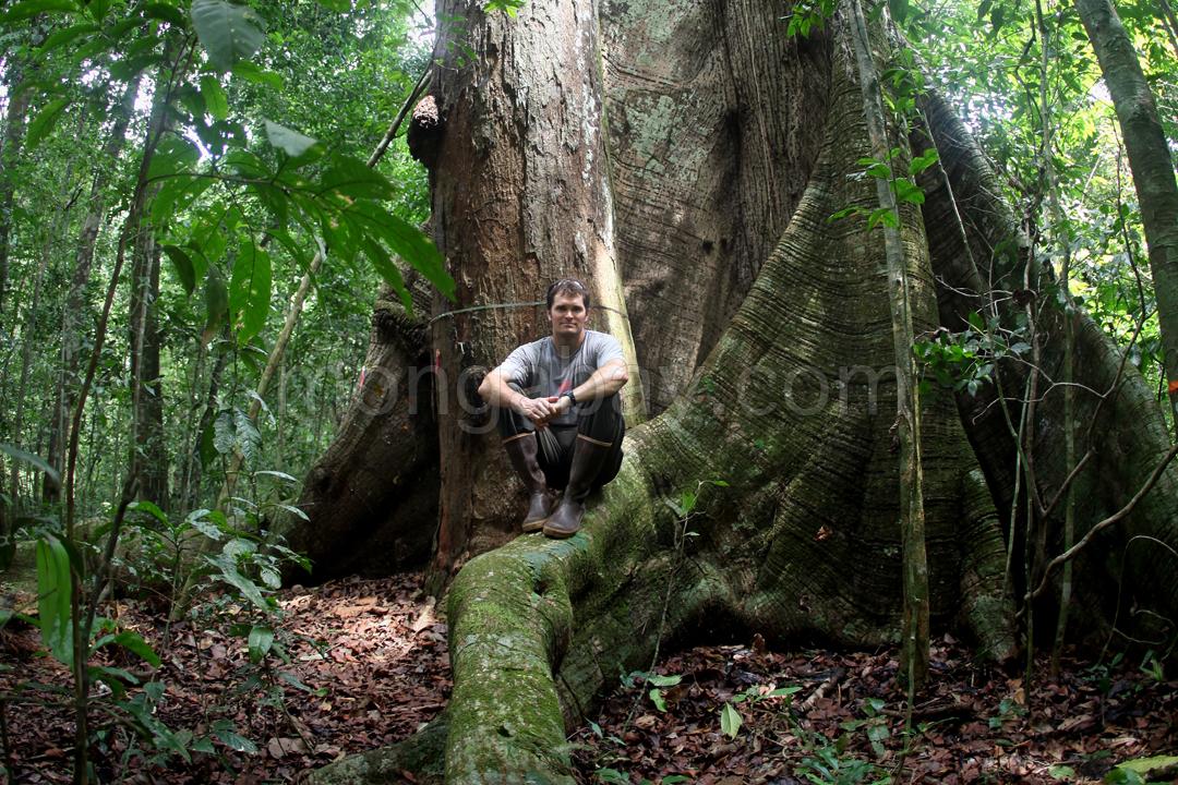 Rhett Butler im Regenwald