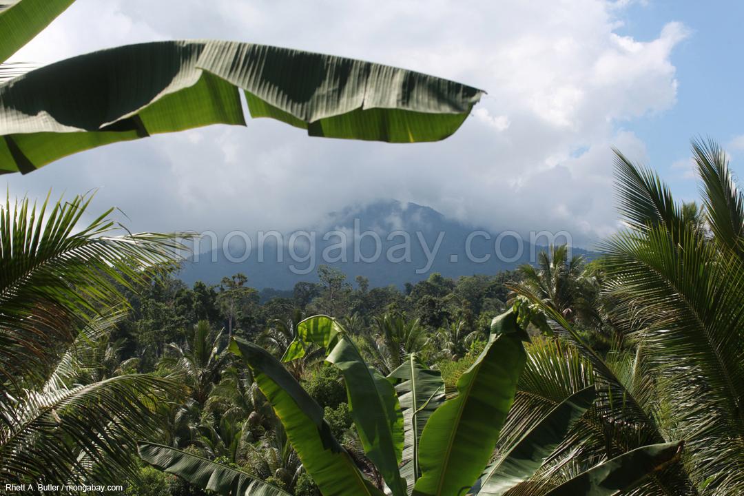 Tangkoko, ein inaktiver Vulkan in Nordsulawesi