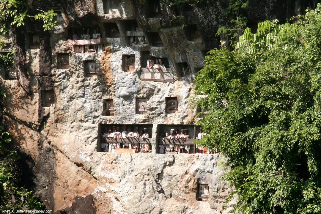 Hölzerne Bildnisse von verstorbenen Toraja.