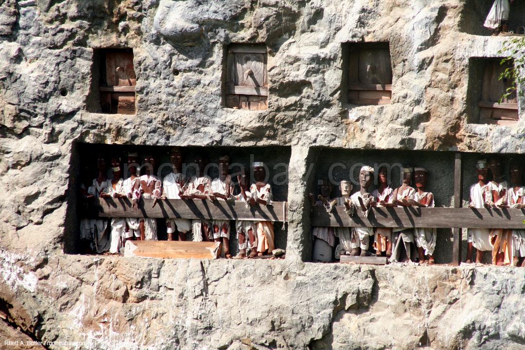 Holzbildnisse, die die Ahnen der Torajas darstellen
