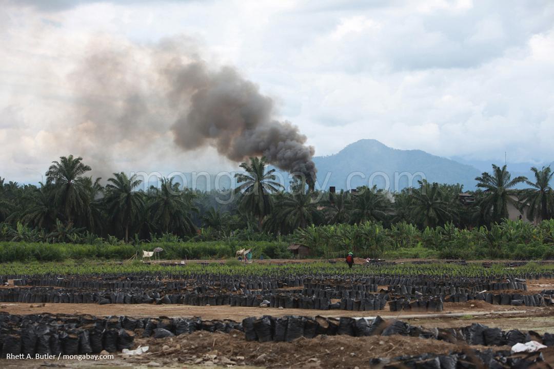 Palmölmühle auf Sumatra