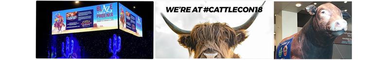 CattleCon_1