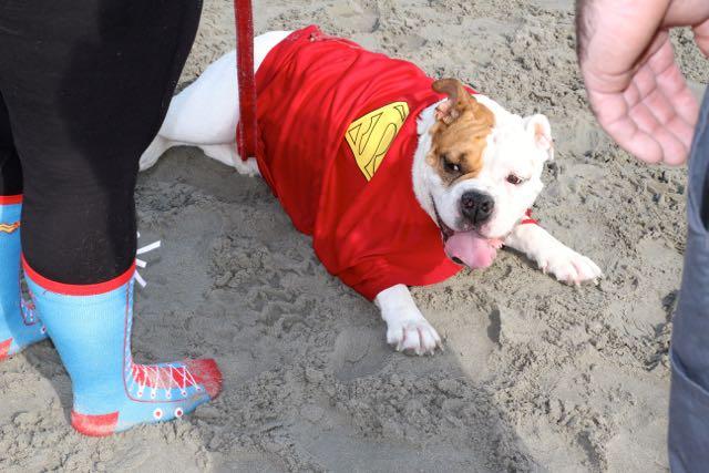 Doggie Dash Race11