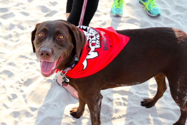 Doggie Dash Race3