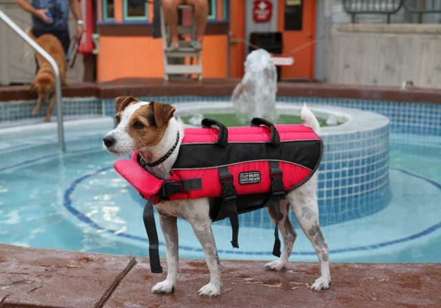 Dog In  Lifevest