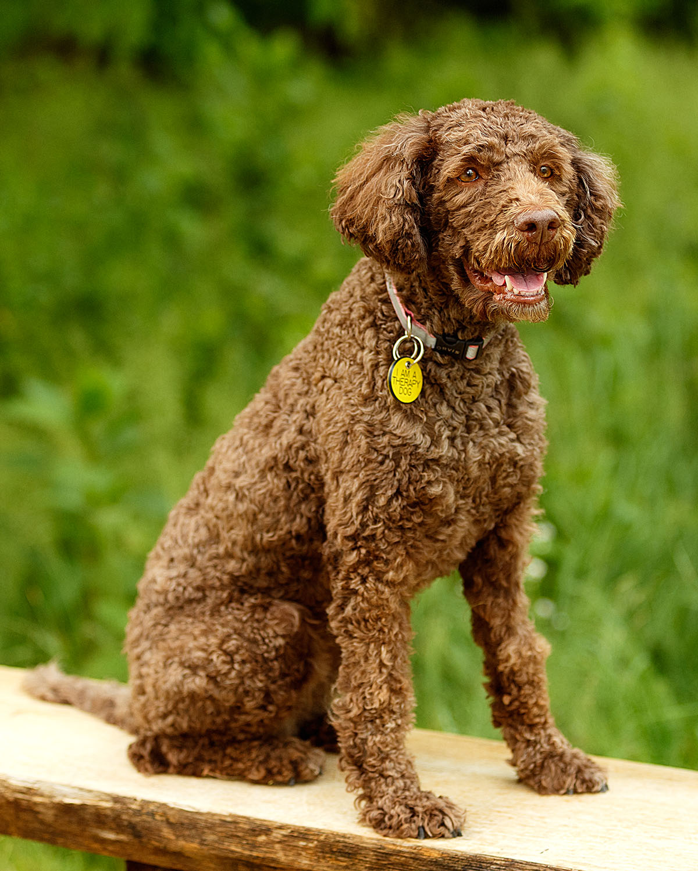Kibbi : The Morris-Baker Therapy Dog