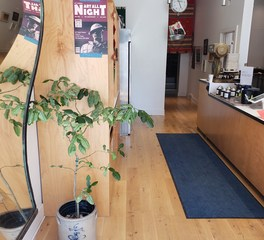 Allegheny mountain hardwood flooring WO Live Sawn RW Long Length reed co Pittssburgh juice bar 1