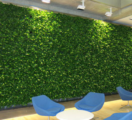 ambius gwu interior green wall