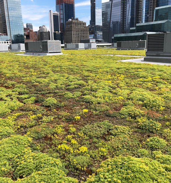 Chatfield Green Roofing