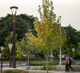 Landscape Forms Madison Area Technical College Exterior Walkway Lights
