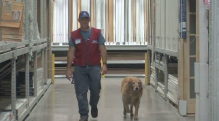 Veteran struggles to get a job because of service dog, Lowe's decides to hire them both