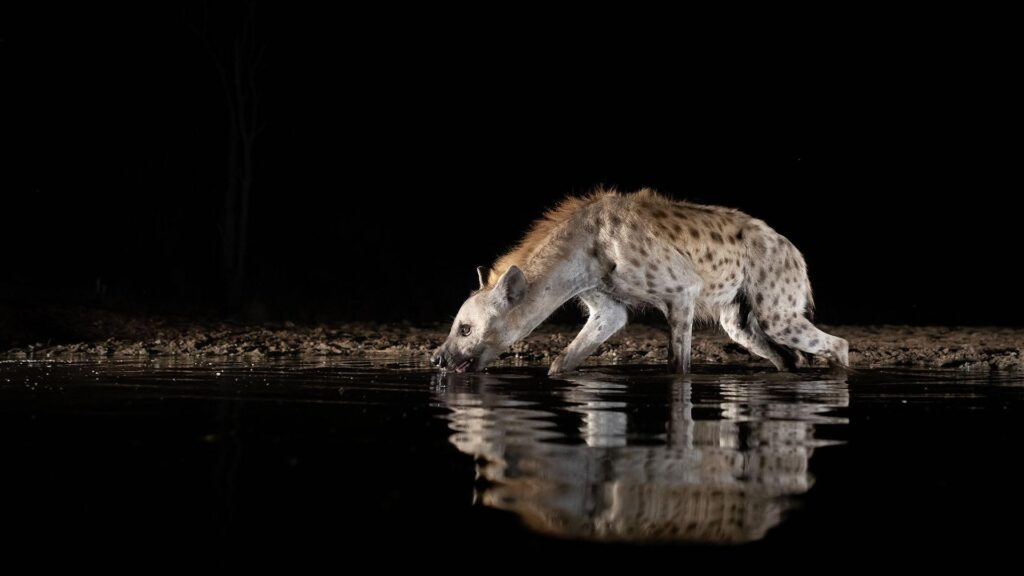 This image has an empty alt attribute; its file name is Life-at-the-Waterhole-Episode-2-1024x576.jpg