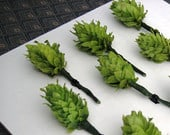 DIY Boutonniere Hops for Weddings 10 Prewired Hops Cones w/Stems Ready for Boutonnieres, Beer Boutonniere Hops, Brewery Wedding Hops Cones