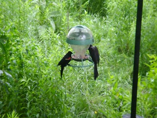 Minnesota Zoo - Bird Feeder