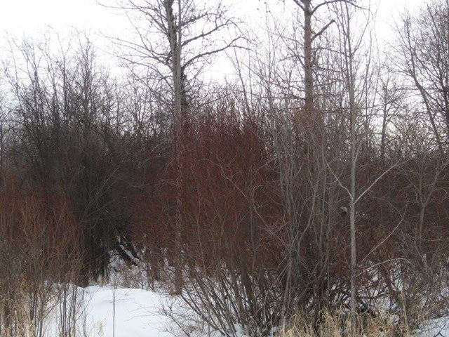 Main Photo: Lot 22 Block 6 Plan 0824512: Rural Lac Ste. Anne County Rural Land/Vacant Lot for sale : MLS®# E4097928