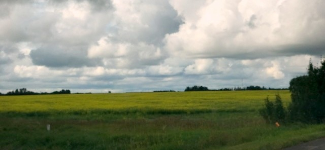 Photo 9: 51072 Range Road 243: Rural Leduc County Rural Land/Vacant Lot for sale : MLS® # E4077700