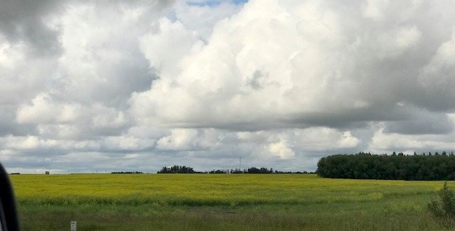 Photo 8: 51072 Range Road 243: Rural Leduc County Rural Land/Vacant Lot for sale : MLS® # E4077700
