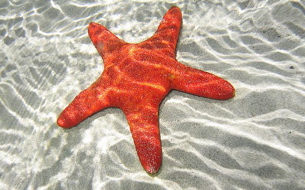 StarFish Profile Image