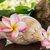 Plumeria maui hawaii