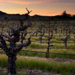 Bedrock Vineyard in Sonoma Valley