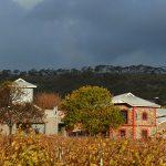 金色的葡萄园在澳大利亚酒厂的前黄昏建设金宝博手机
