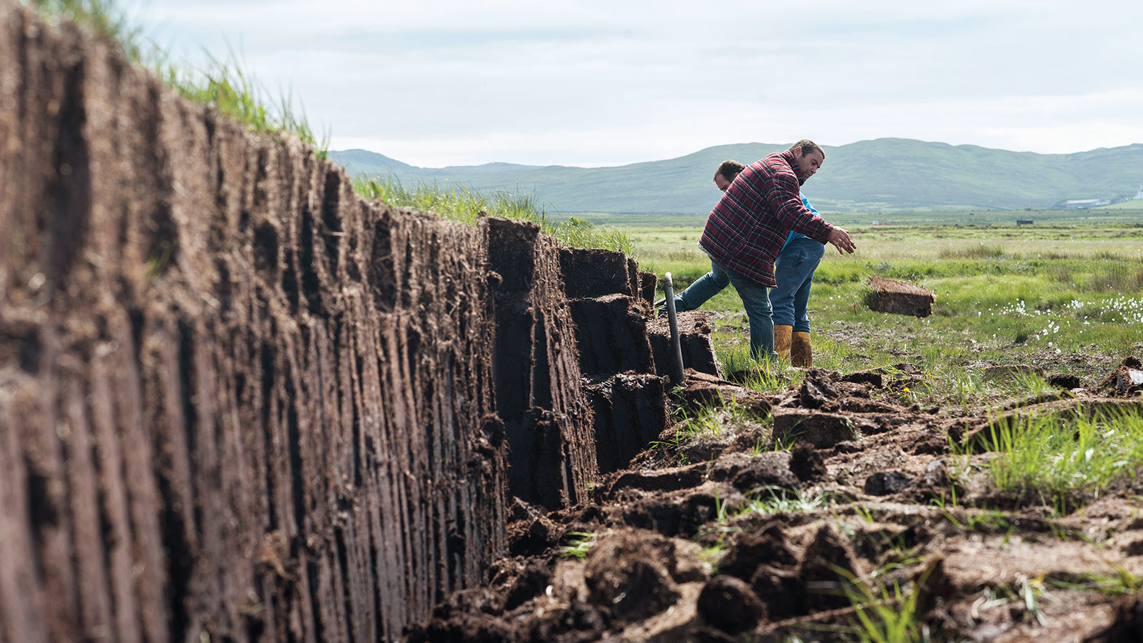 Everything You Need To Know About Peat In Whisky Whisky