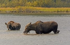 Wildlife Viewing this fall in Missoula, Montana