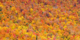 Fall foliage on mountain side