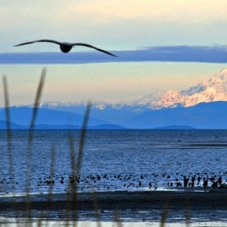 Dungeness Spit and Wildlife Refuge in Sequim