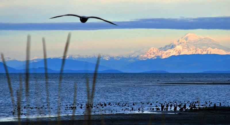 Getaways to the Dungeness Bay Cottages in Sequim, Washington for 2019